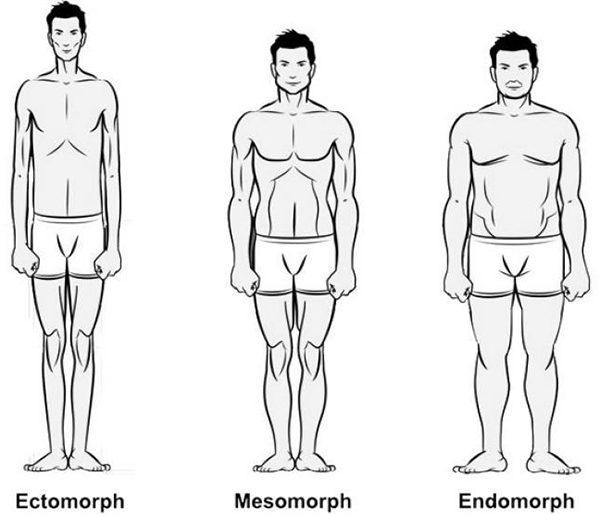 1164802_endomorfnyi-tip-teloslozheniya